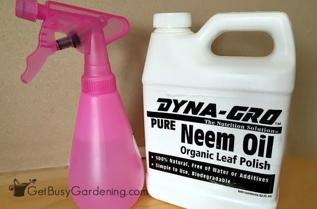 Neem oil organic pest control for gnats