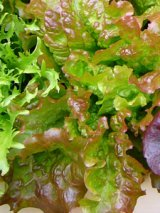 Lettuce Varieties—'Red Sails' in a Window Box