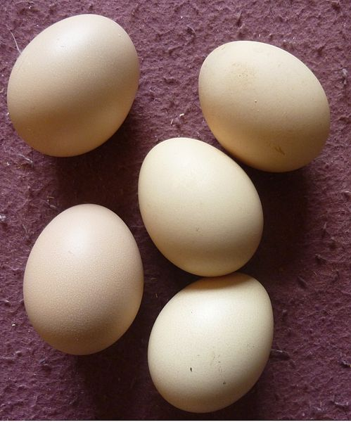 Silkie chicken eggs - an unremarkable,  standard light brown colour.